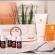 Hayat Kozmetik - Histomer Vitamin C